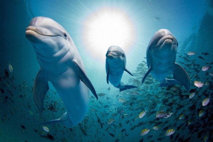 dolphin-fish-school.thumb.jpg.d618aa10d0765e14d8fbc20a1c428455.jpg